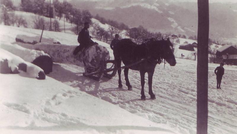 Holzziehen mit Pferd und Schlitten