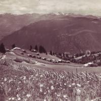 Berg 1955